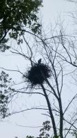 The Beaver River - Bald Eagle