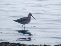Sandpiper at Point Pelee