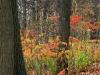 fall-10-of-12-medium