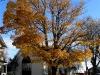 fall-12-of-12-medium