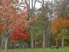 fall-5-of-12-medium