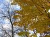 fall-6-of-12-medium