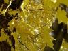 fall-7-of-12-medium
