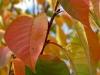 fall-9-of-12-medium