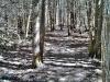 Walk through the woods to Jones Falls