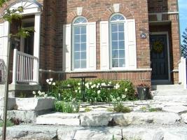 Front garden in Spring
