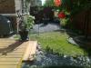 Back Garden Summer 2011
