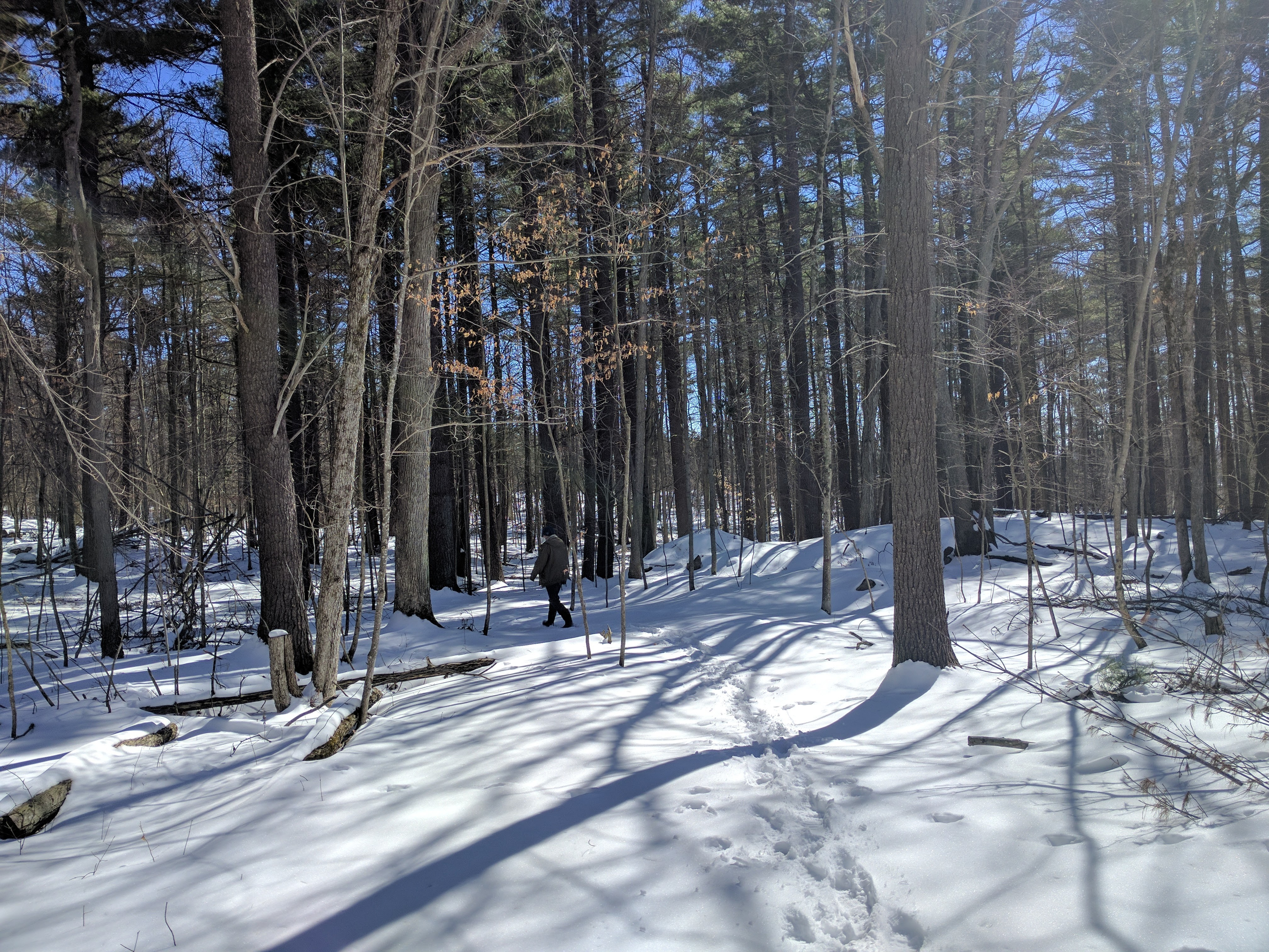 A March hike through the woods at Foley Mountain