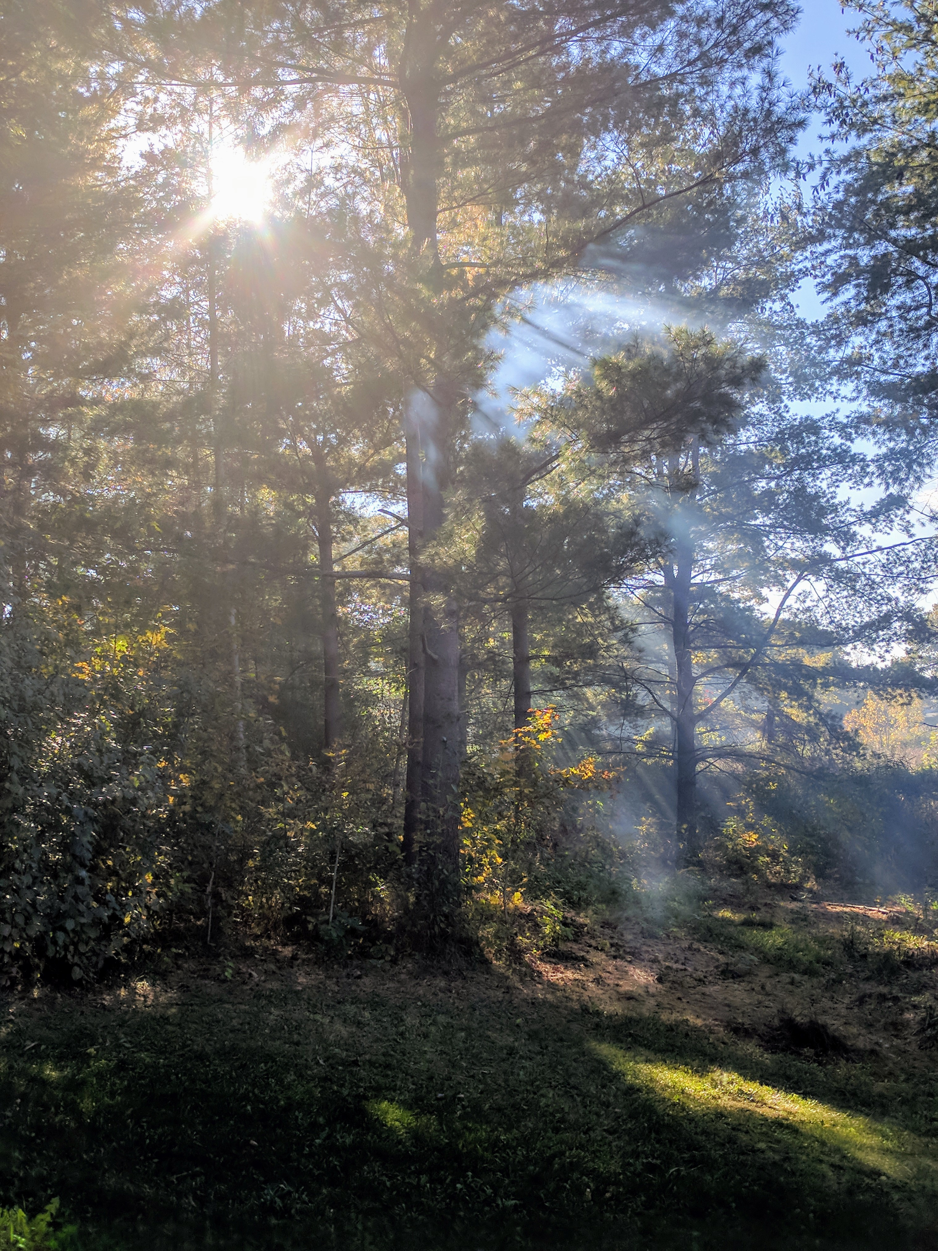 Sunshafts in the wood