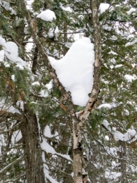 Valentine's Day Heart in Algonquin Park!