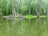 The Beaver River - living up to its name (though we didn't see one!)