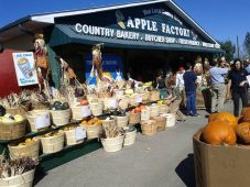 Apple Factory - Harvest