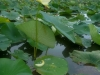 Plantlife at Point Pelee