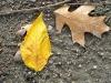 fall-11-of-12-medium