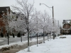 Toronto Ice-Storm 2013