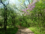 Doris McCarthy Trail to Guildwood