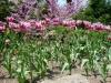 Royal Botanical Gardens, Hamilton