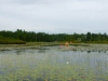 Lily Bay, Gull Lake, Gravenhurst