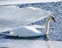 Toronto Winter 2011 (34 of 35)