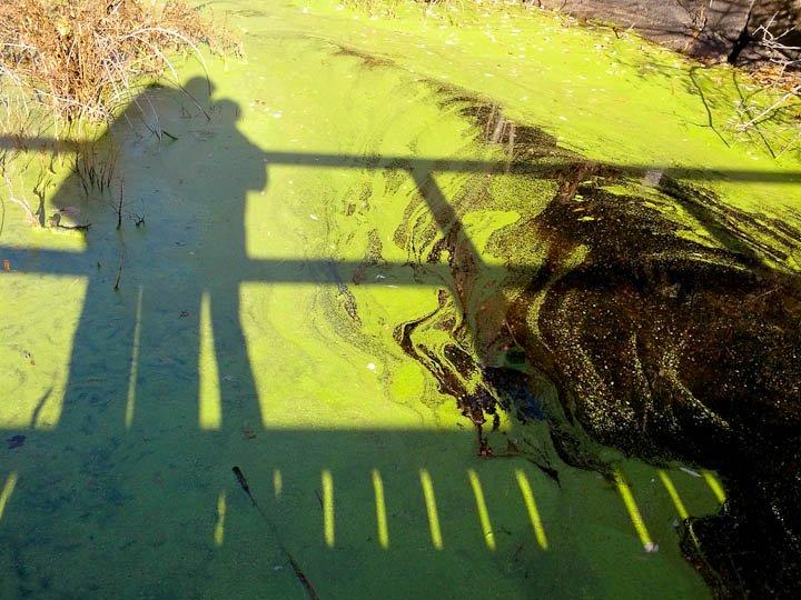 Bridge Shadows, Frontenac Park