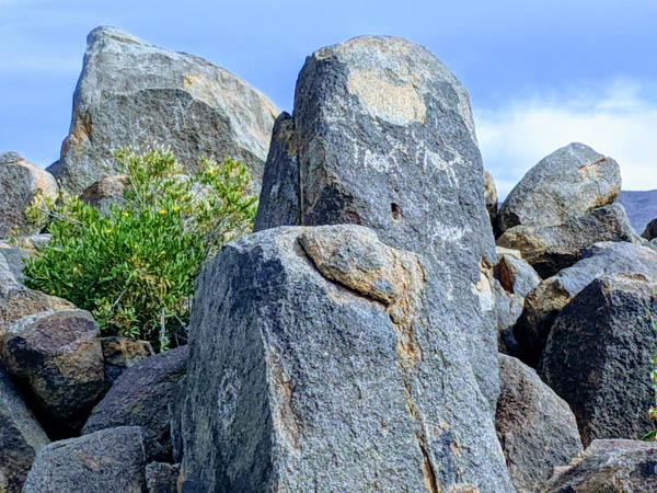 Petroglyphs at Saguarao National Park