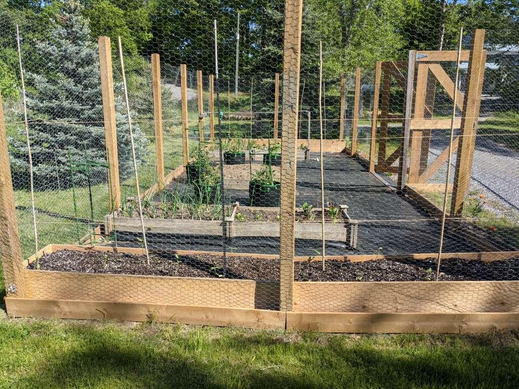 New caged kitchen garden