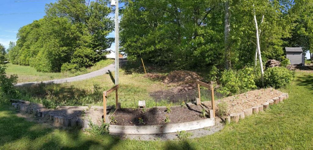 Cutting & asparagus bed May 2021