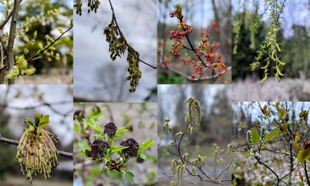 Trees - the beauty of their flowers